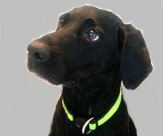 8 wichtige Experten – Hunde – Tipps