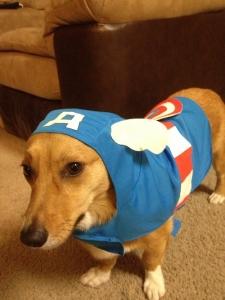 Anti Stress Shirt für Hunde